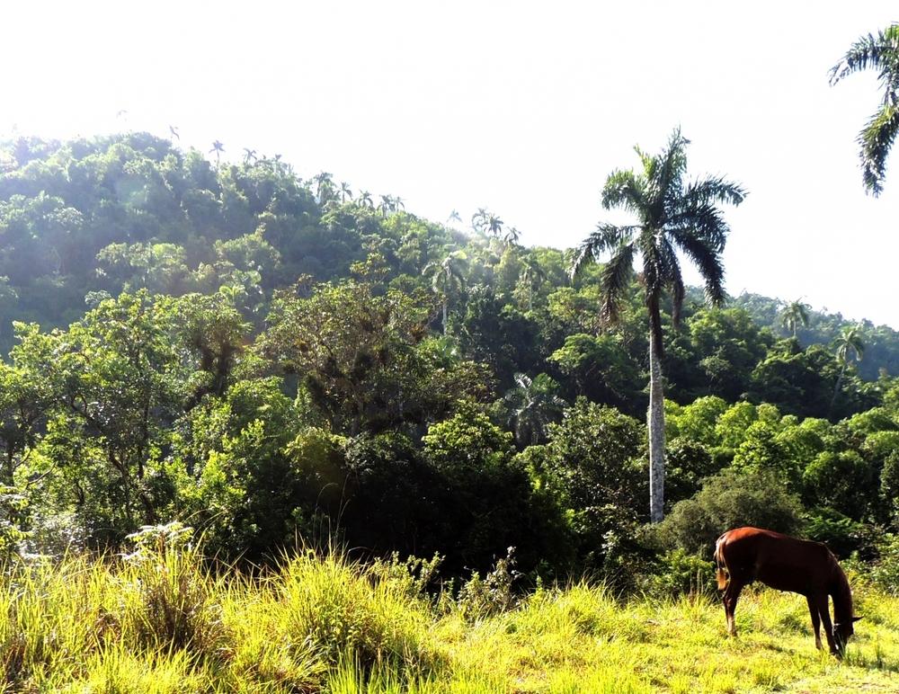 montañas  enmarcadas por las palmas reales que delatan su cubana geografía