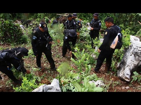 Falta de estado agudiza trasiego de drogas en Guatemala